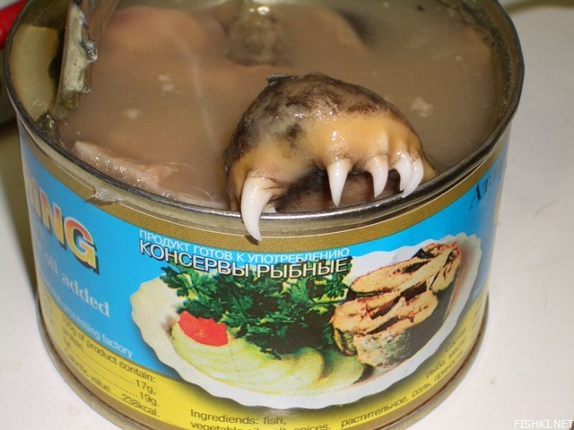 30 canned foods you never knew existed ar15 com for Canned fish assholes